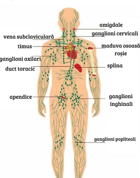 alimente bune pentru sistemul limfatic)